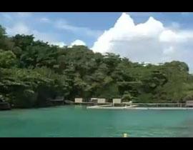 到牙买加 与海豚亲密接触感受碧海蓝天
