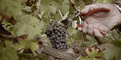 葡萄丰收!来里西班牙瑞格尔侯爵酒庄品味美酒