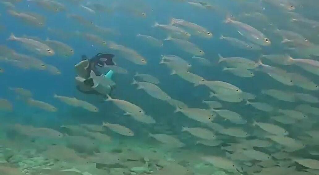 """震撼!潜水员瞬间被库拉索岛的鱼群风暴""""吞没"""""""